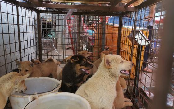 2020-06-22T000000Z_1252693749_RC29EH9PMU7G_RTRMADP_3_HEALTH-CORONAVIRUS-CHINA-DOGS.JPG
