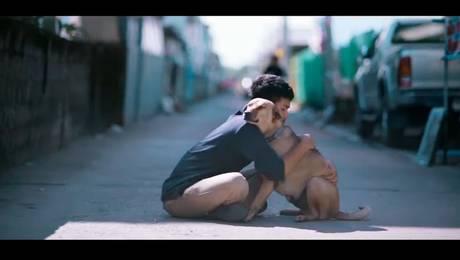 ¡Hermoso! Joven regala abrazos a perros abandonados