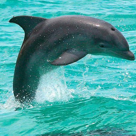 Los delfines son pequeñas ballenas