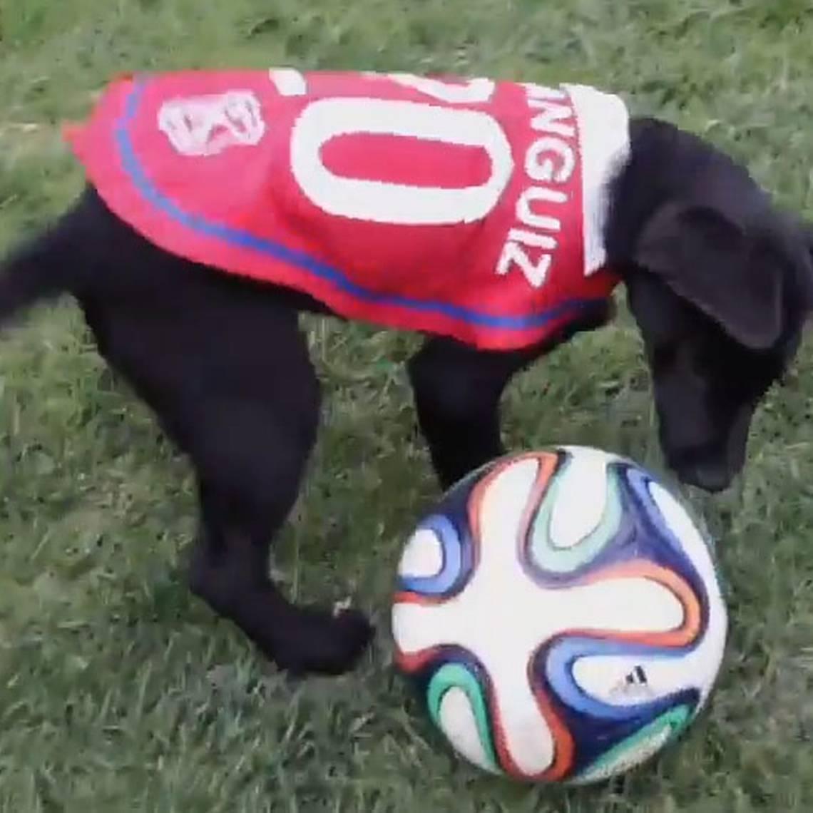 Cachorros de Carabineros protagonizan arenga para \'La Roja\'