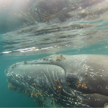 Glaciares y ballenas