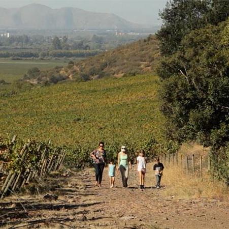 Producción de vinos verdes