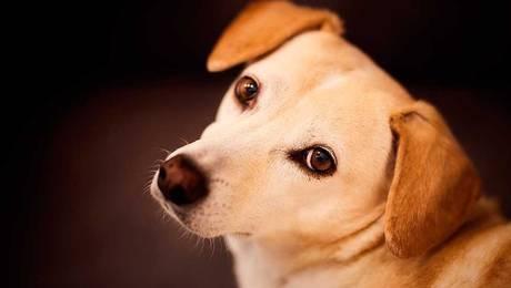 ¡Un millón y medio! Las multas que tendrá que pagar si no inscribe a su mascota