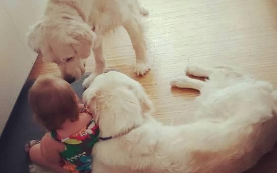 """Perros ayudan a guagua a \""""fugarse\"""" de su cama y todo queda registrado"""