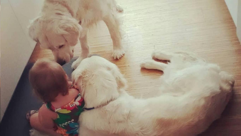 """Perros ayudan a guagua a """"fugarse"""" de su cama y todo queda registrado"""