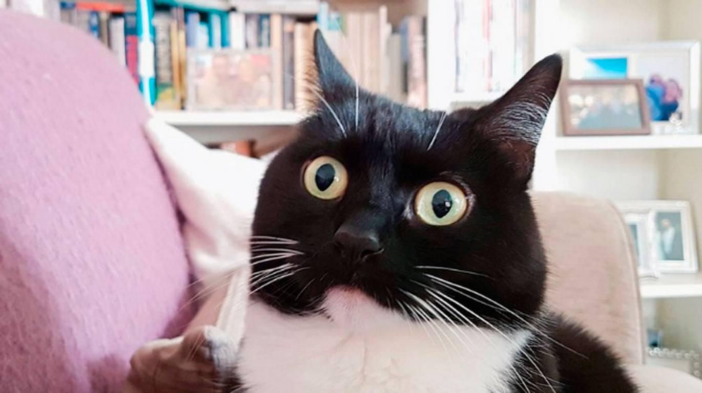 Zelda, la gata que conquistó Twitter con su cara de asombro