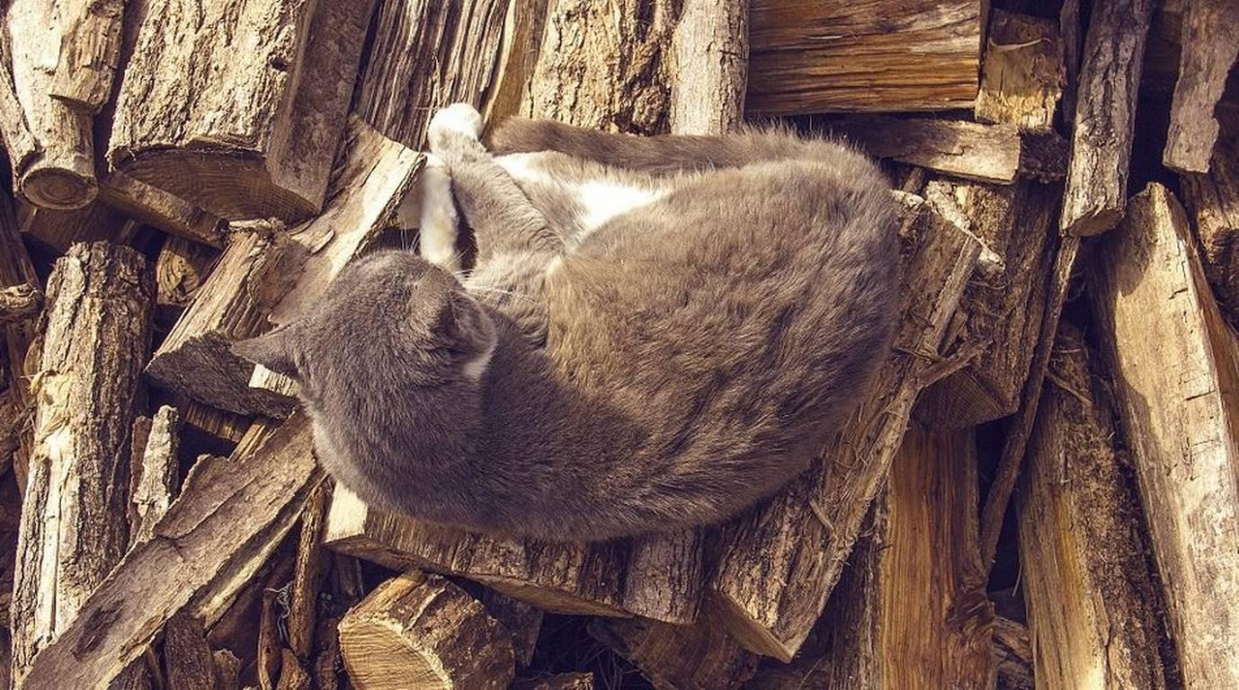 La historia del gato que se robó el corazón de los twitteros