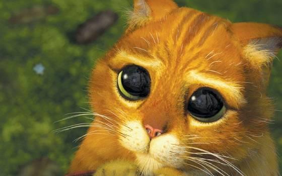 """El gatito \""""triste\"""" que se robará tu corazón"""