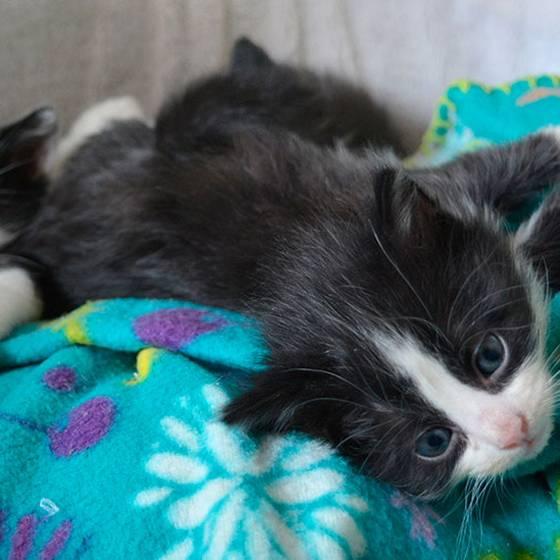 ¿Qué hacer para ayudar a los gatitos huérfanos?