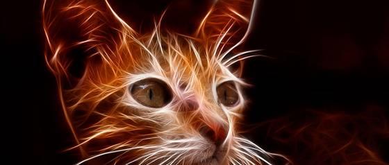Popular red social lanza filtros que reconocerán a tu gato