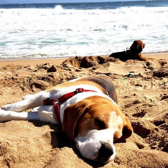 ¿Cómo proteger a nuestras mascotas del calor?