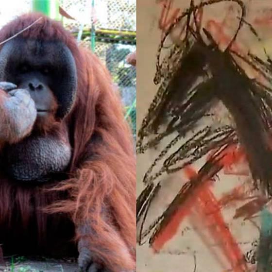 La historia del orangután que pinta cuadros