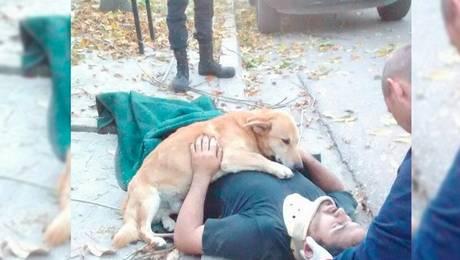 ¡Conmovedor! Perro reconforta a su dueño después de un accidente