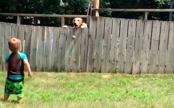 """¡Amigos! Un niño juega con su \""""perro vecino\"""" y enternecen a la web"""