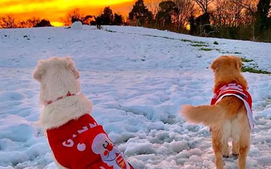¡Mira el video navideño de los perros de Alexis Sánchez!