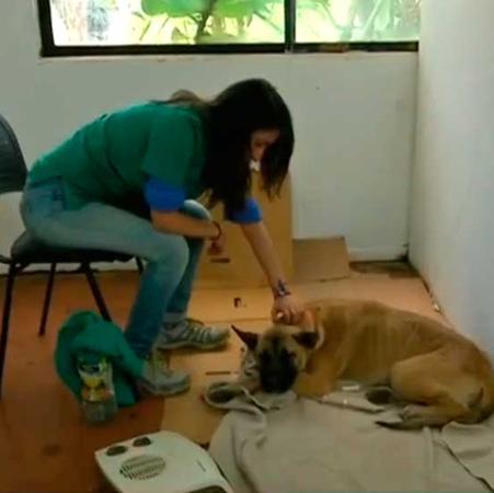 ¡Esterilización de perros vagos en Isla de Pascua!