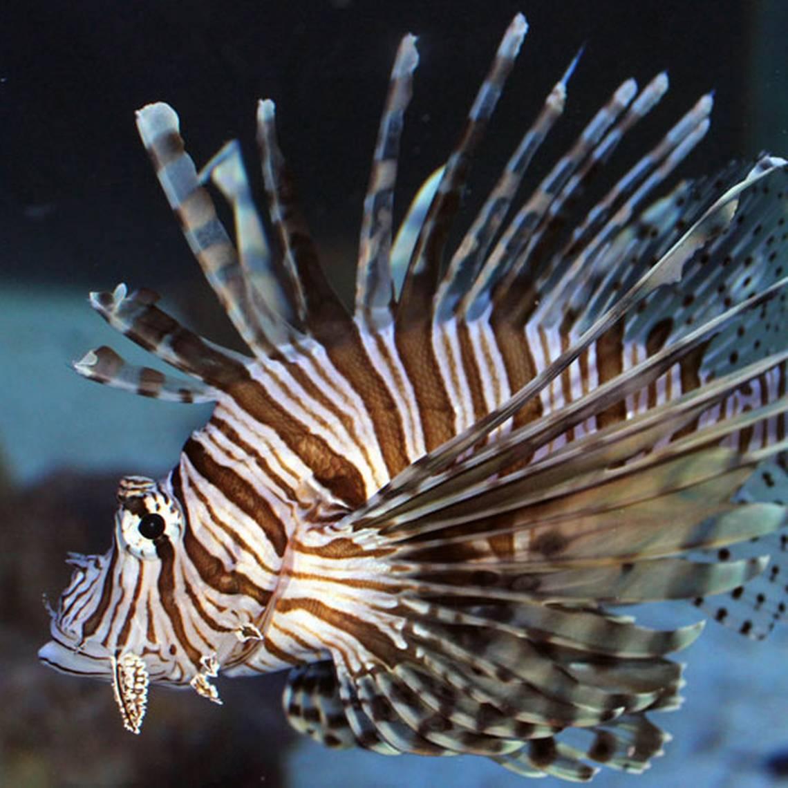 ¡Sumérgete en el mundo marino de Aquamundo Aquarium!