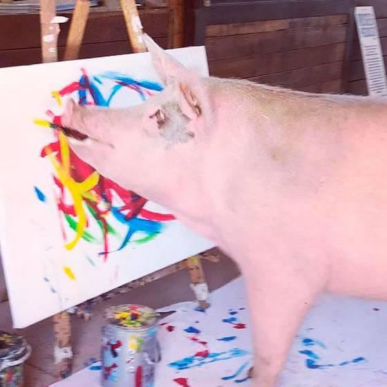 ¡Impresionante! La cerda \'Pigcasso\' pinta cuadros que se venden a mil euros