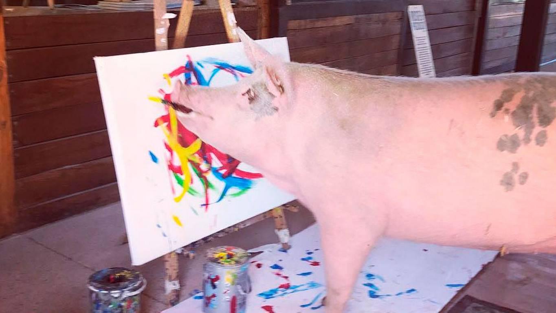 ¡Impresionante! La cerda 'Pigcasso' pinta cuadros que se venden a mil euros